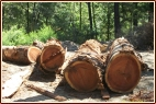 Old Growth Redwood Logs, Growth rings, tight grain timber, beautiful wood