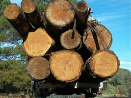 Logging and Log Transportation, Trucking, Logging, Clearing, Cutting